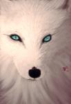 whitefox97