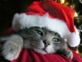 anothercat